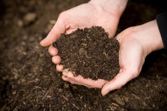 تغدیه درختان به روش چالکود – روش نوین تغذیه ای درختان میوه