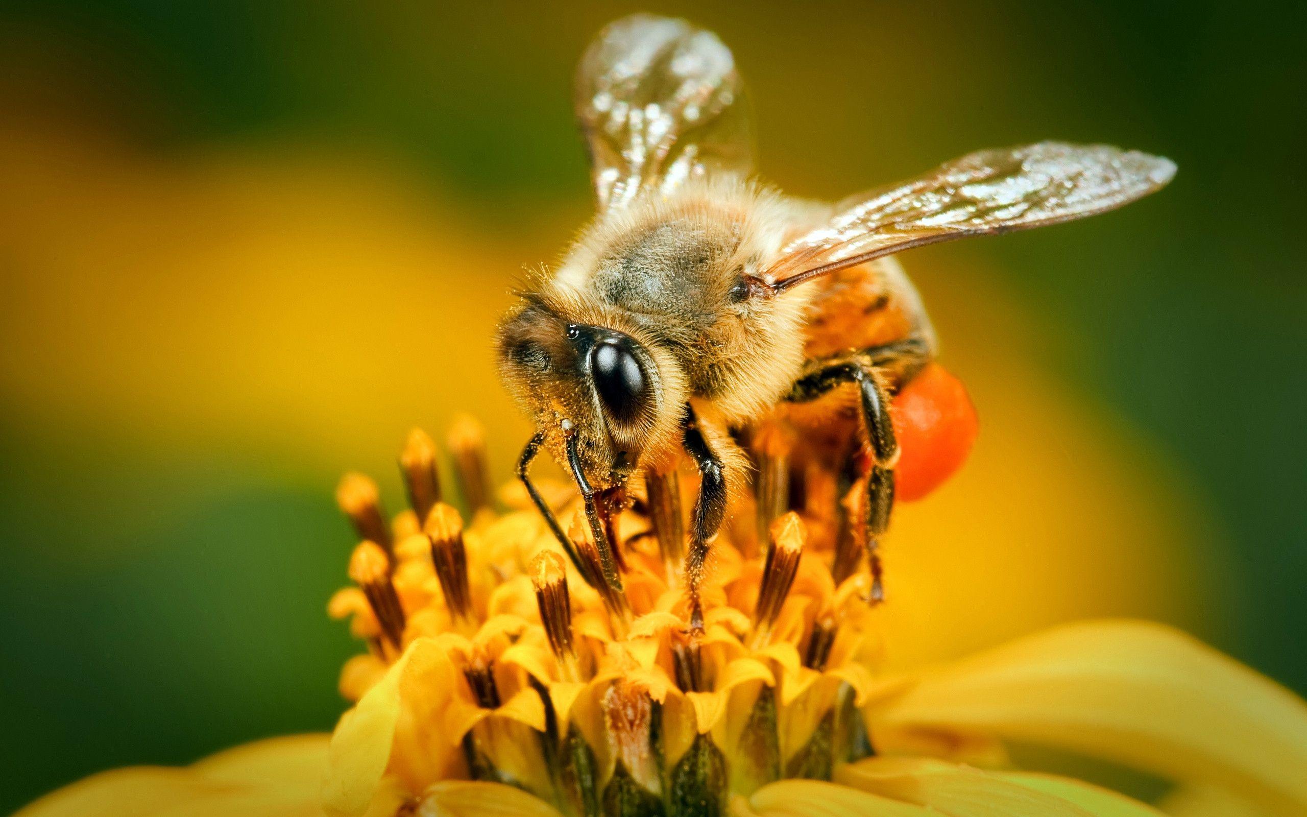 دلایل موفقیت حشرات در مقابله با شرایط نامساعد