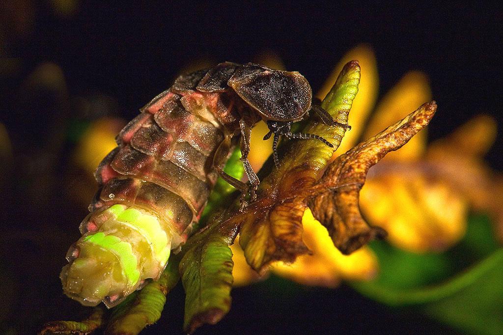 روش های تولید مثل ویژه جنسی حشرات در شرایط نامساعد