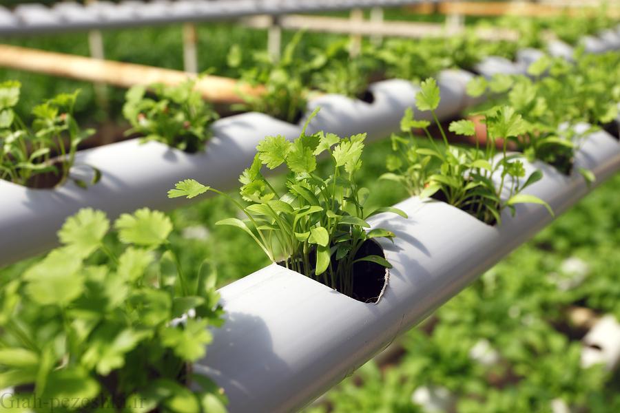 مهم ترین مزایا و معایب کاشت گیاهان به صورت هیدروپونیک