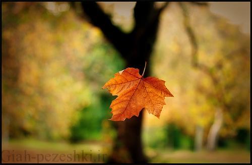 علت ریزش ناگهانی برگ های گیاهان آپارتمانی