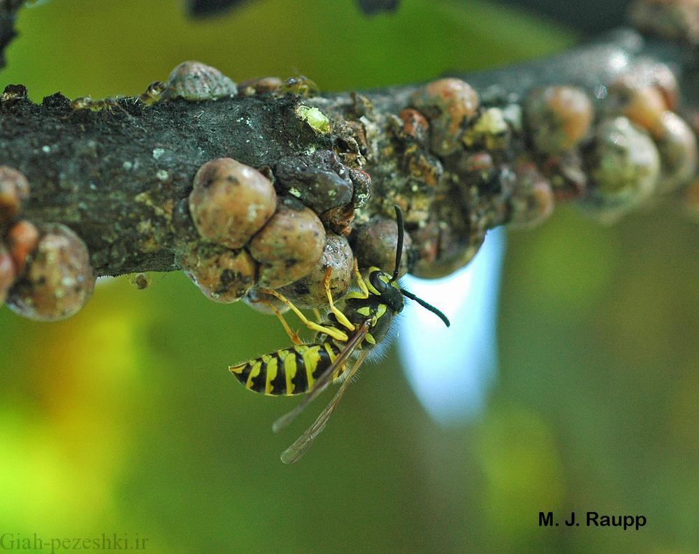 ارتباط کربوهیدرات ها در رژیم غذایی حشرات