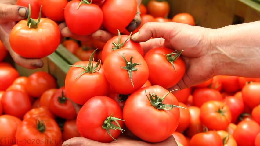 دلایل اصلی ریزش گل ها و بار ندادن گوجه فرنگی