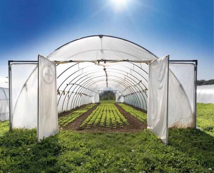 مراحل و روش های ایجاد گلخانه خانگی