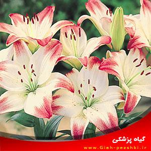 مهم ترین نکات نگهداری و کاشت گل نیلوفر