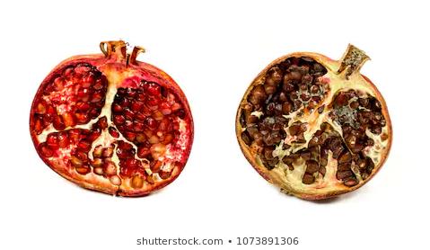 پوسیدگی میوه انار