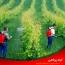 انواع فرمولاسیون مهم سموم کشاورزی