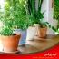 لیستی از بهترین گیاهان تصفیه کننده هوا مناسب برای آپارتمان
