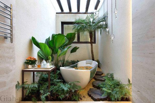 چه گیاهانی برای حمام مناسب و قابلیت رشد دارند