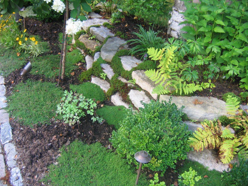 کاشت گیاه در درز شکاف های سنگ