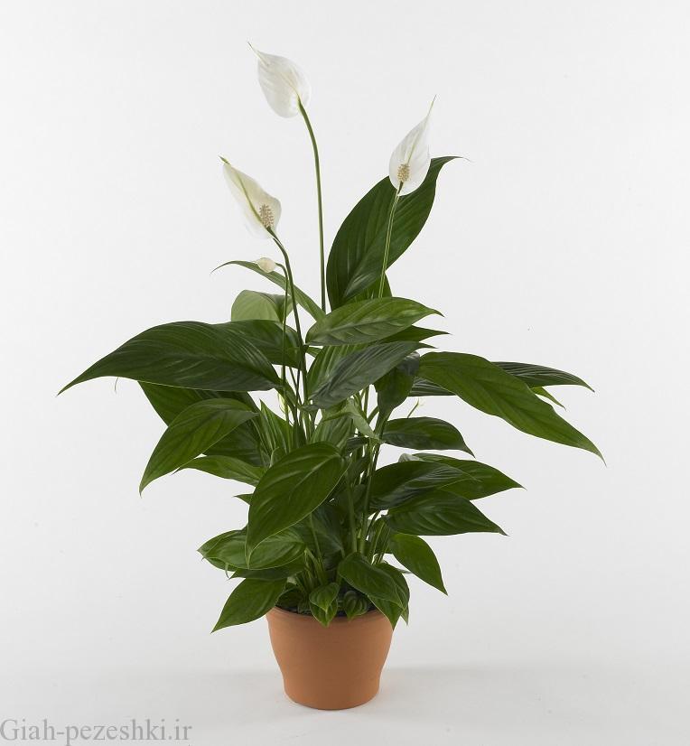 برترین گیاهان مناسب برای پرورش در آپارتمان های کم نور