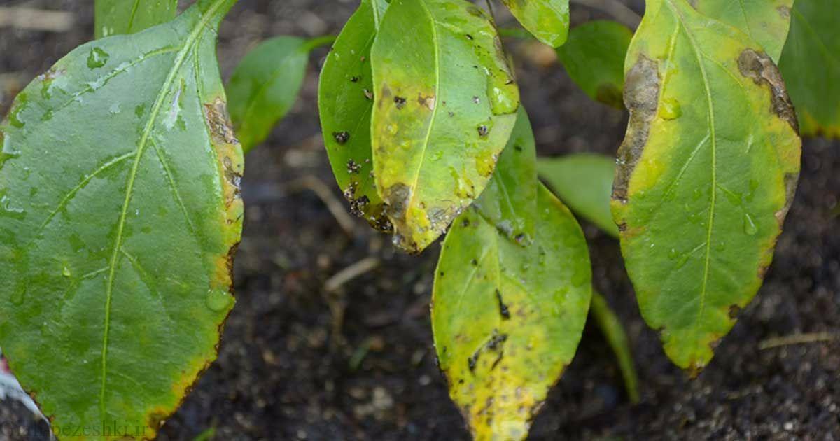 علت و علائم کمبود مواد غذایی در گیاهان