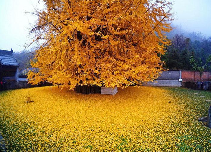 معرفی درختان و درختچه های مقاوم به سرما و یخبندان