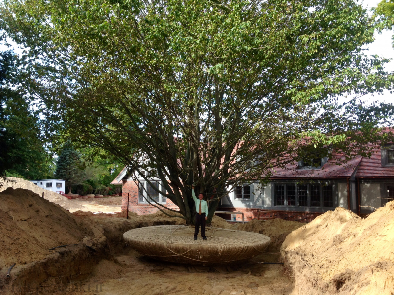 نحوه جابه جا کردن کامل درختان بزرگ