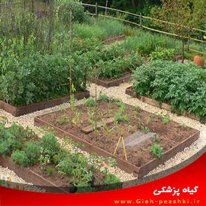انتخاب بهترین گیاهان زراعی برای باغچه های خانگی