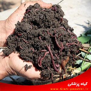معرفی فواید ورمی کمپوست (کود کرمی) در کشاورزی