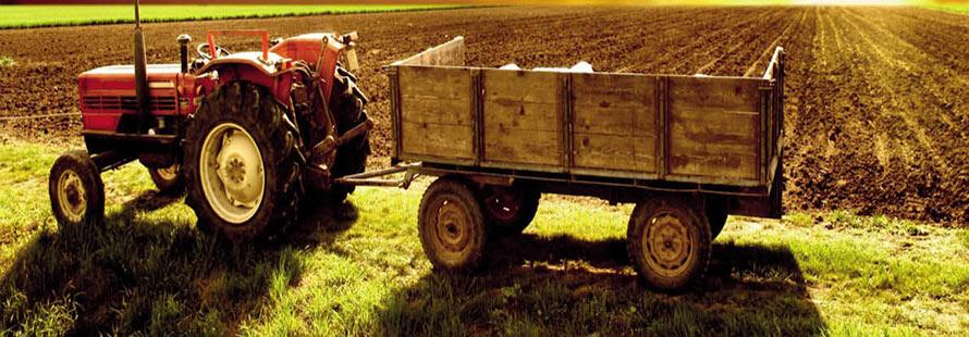 مدیریت و راه اندازی کشاورزی ارگانیک