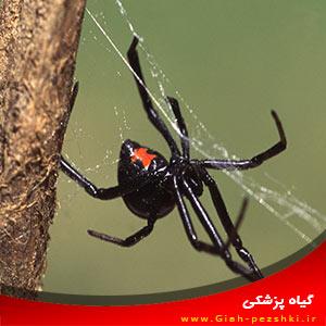 استفاده از عنکبوت ها برای از بین بردن آفات