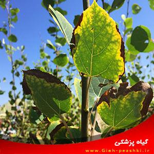 راهکارهای کاهش تنش گرمایی گیاهان در تابستان