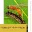 فایل پاورپوینت شناسایی و معرفی حشرات موثر در کنترل بیولوژیک