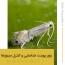 پاورپوینت آماده بررسی زیست شناسی، خسارت و کنترل مینوزها