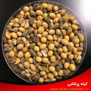 تحقیق آماده بیماری های مهم بذرزی (بذرزاد) در محصولات زراعی
