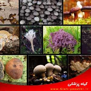 نمونه سوال درس قارچ شناسی تکمیلی ارشد بیماری شناسی گیاهی