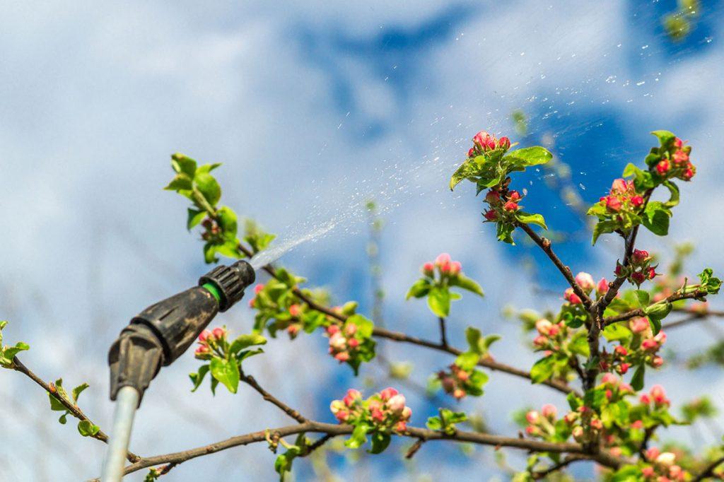 آیا امکان سمپاشی در دوران گلدهی درختان وجود دارد؟