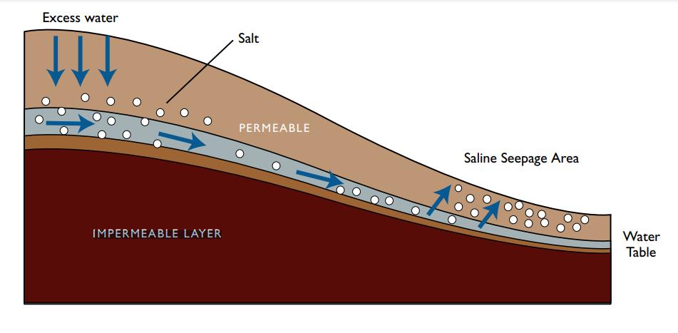 شناسایی و آشنایی بیشتر مدیریت شوری و سدیمی شدن خاک