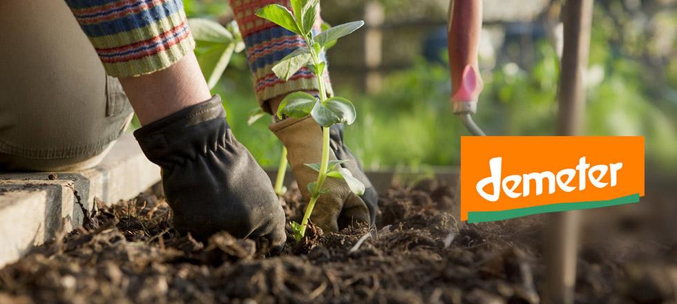 کود زیستی ریشه زایی و افزایش مقاومت گیاه دیمیتر