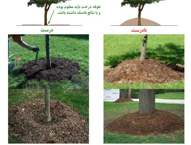 استفاده از مالچ یا خاکپوش برای مبارزه با شوری خاک